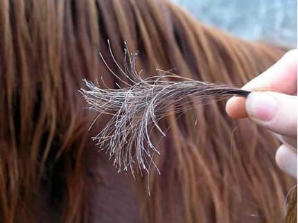 مشاكل الشعر وأعراضها